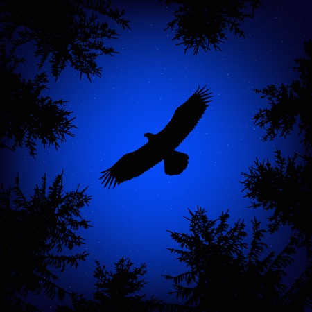 animal silhouette: Silhouette of coniferous trees on the background of blue sky. Night.  Flying eagle. View from below.