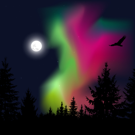 Silhouette of coniferous trees on the background of colorful sky.  Flying eagle. Night. Green  and pink northern lights.