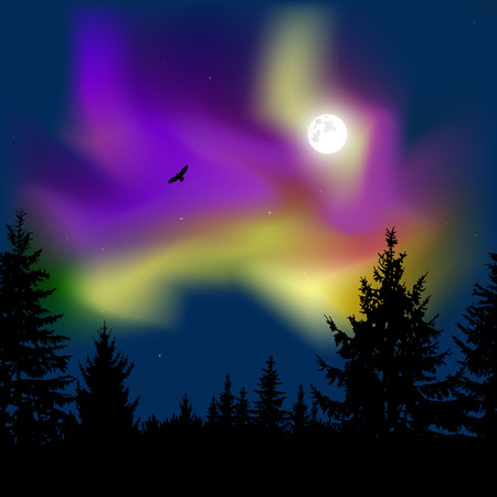 Silhouette of coniferous trees on the background of colorful sky.  Flying eagle. Night. Moonlight.  Violet  and yellow northern lights. Stock Photo