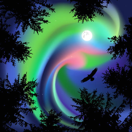 Silhouette of coniferous trees on the background of colorful sky.  Eagle in the sky. Night. Northern lights.   View from below.