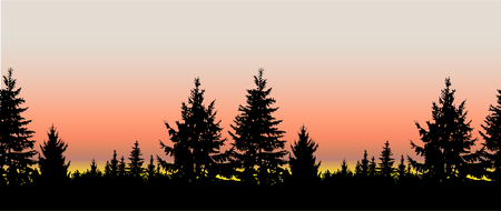 mountain silhouette: Silhouette of coniferous trees on the background of colorful sky. Sunset.