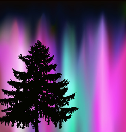 Silhouette of coniferous tree on the background of colorful sky. Evening. Northern lights.  Neon presentation.