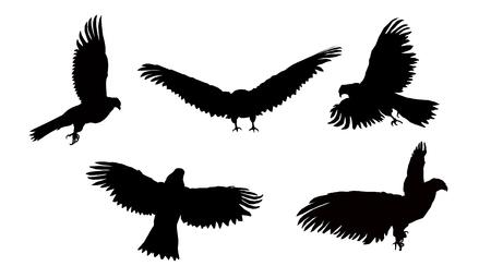 goshawk: Set. Silhouettes of flying eagle.