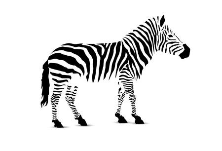 Zebra. Silhouette of black stripes.