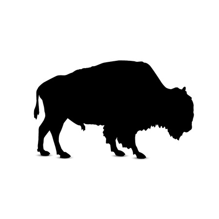 Silhouette of buffalo.