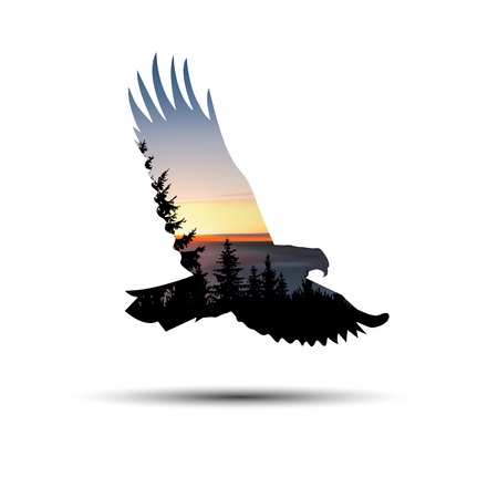 Silhouette of flying eagle with coniferous trees, sea horizon and colorful sky.