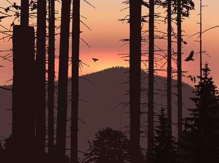 Image landscape. Eco banner. Sunset in mountains.
