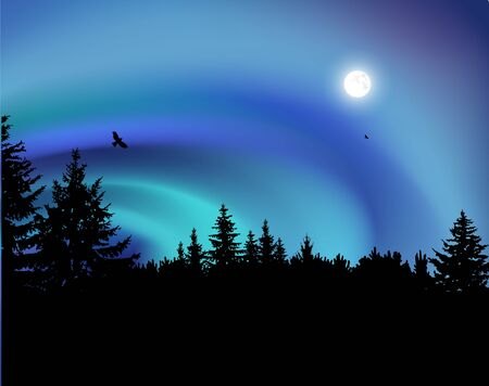 Image landscape. Silhouette of coniferous trees on the background of colorful sky.  Flying eagles. Night. Moonlight. Northern lights.