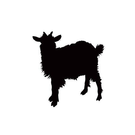 Silhouette of wooly goat.