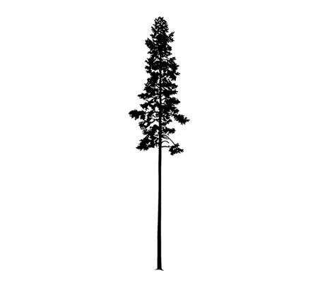 Silhouette of tall skinny pine tree. Hand made.