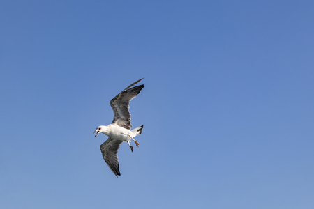close up seagull and blue sky Stock Photo - 108267916