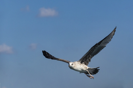 close up seagull and blue sky