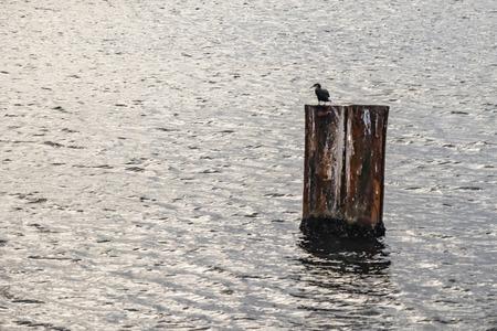 pontoon and bird Imagens