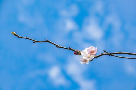 spring flowers on tree branches Stok Fotoğraf