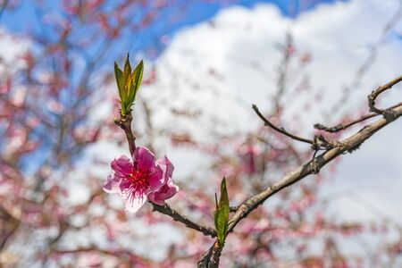 spring flowers on tree branches Stok Fotoğraf - 128060360