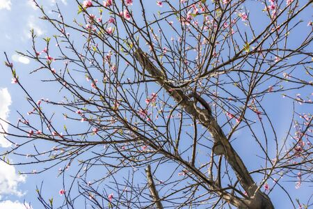 spring flowers on tree branches Stok Fotoğraf - 128060363