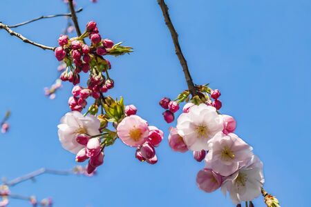 spring flowers on tree branches Stok Fotoğraf - 128060371