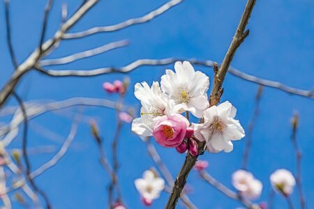 spring flowers on tree branches Stok Fotoğraf - 128060177