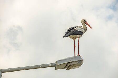 stork on street lamp