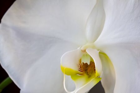 close up orchid flower