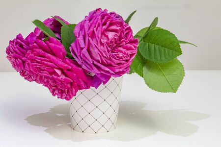 rose flower of elegance Stok Fotoğraf
