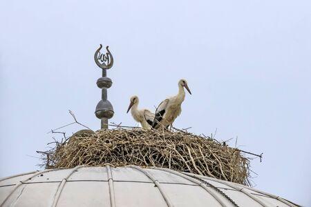 storks in nest Imagens
