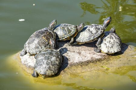 turtles on the rock