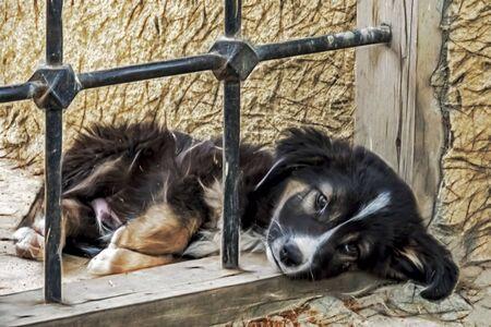 cute friend dogs in nature. Reklamní fotografie