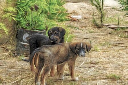cute friend dogs in nature. Stock fotó
