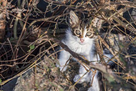 cute friends cats in nature Reklamní fotografie