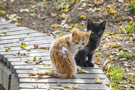 cute friends cats in nature Stockfoto
