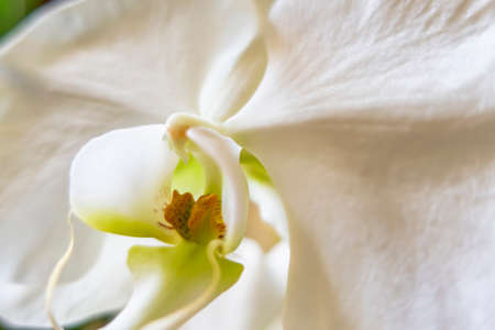 close up white orchid flower Stok Fotoğraf