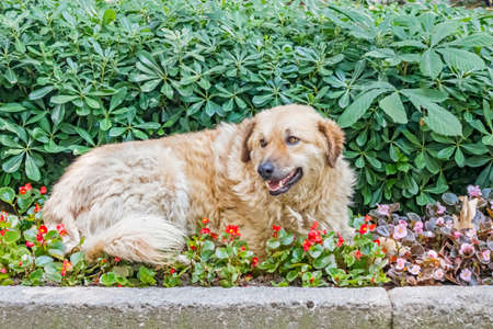 dog in the garden in nature