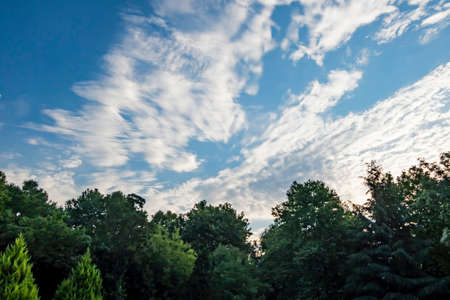 clouds and sky with green trees