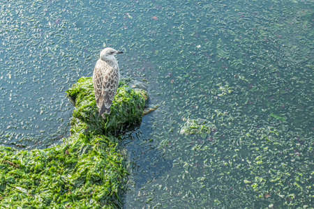 seagull on the rocks at the sea