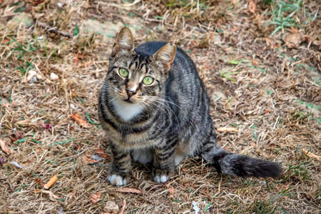Our pet cute friends cats in nature