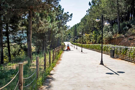 path in the park and green nature 免版税图像