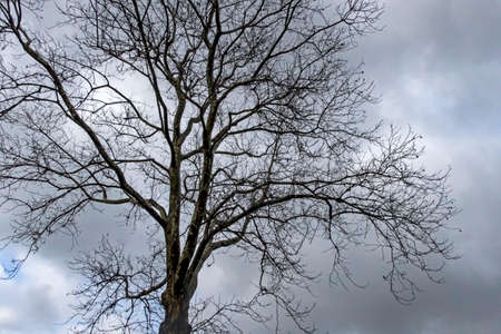 tree in winter season and nature