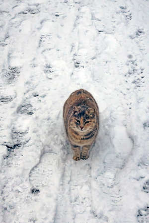 cats in nature on a cold winter day