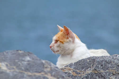 Our lovely friends, cats. Stray cats in nature.