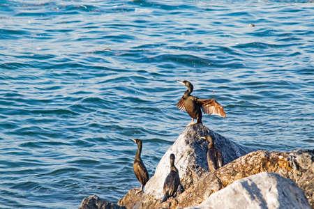 Wavy sea and cormorants on the sea cliffs Banco de Imagens