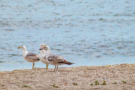 seashore and seagulls on the sand