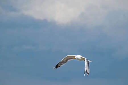 cloudy sky and flying seagull