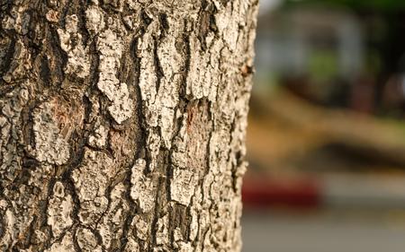 bark background texture: Tree bark background  texture