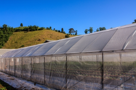 Plant nursery and blue sky, north of Thailand photo