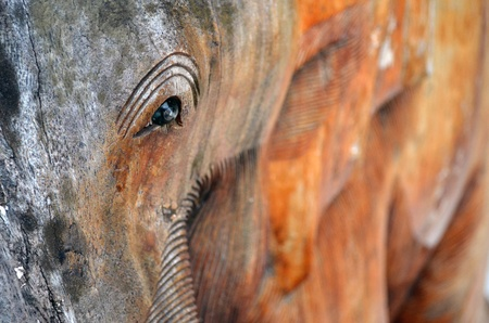 Old wooden eye photo