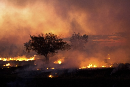 Fuego quema agrícola del arroz
