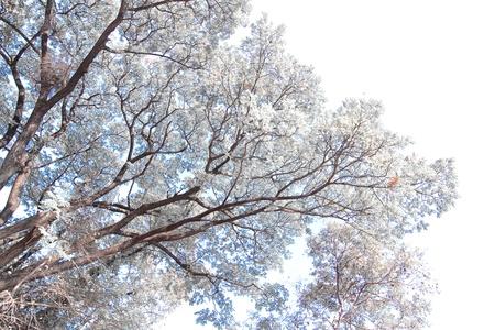 wielkopolskie: White tree Stock Photo