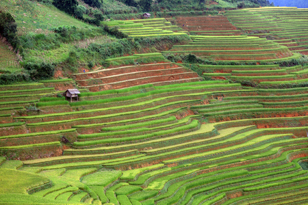 subsistence: Rice farm in Vietnam