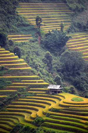 subsistence: Rice terrace